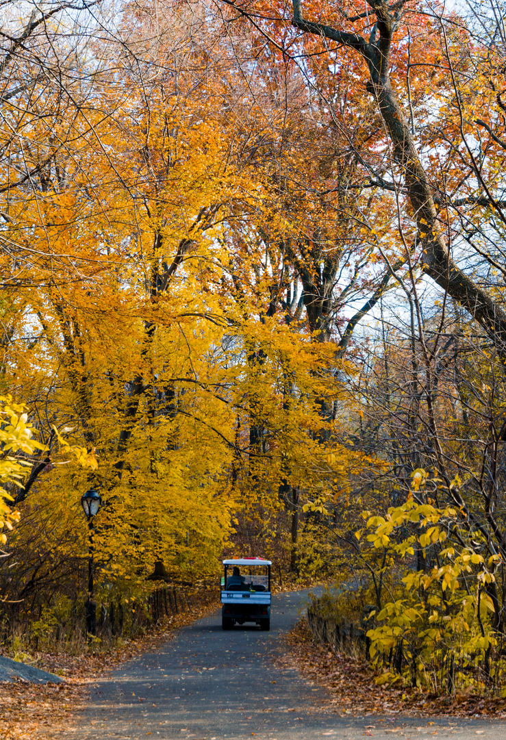 Central Park in Autumn by mnjul