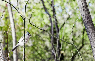 Bird by mnjul