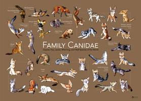 Family Canidae Poster by art-paperfox