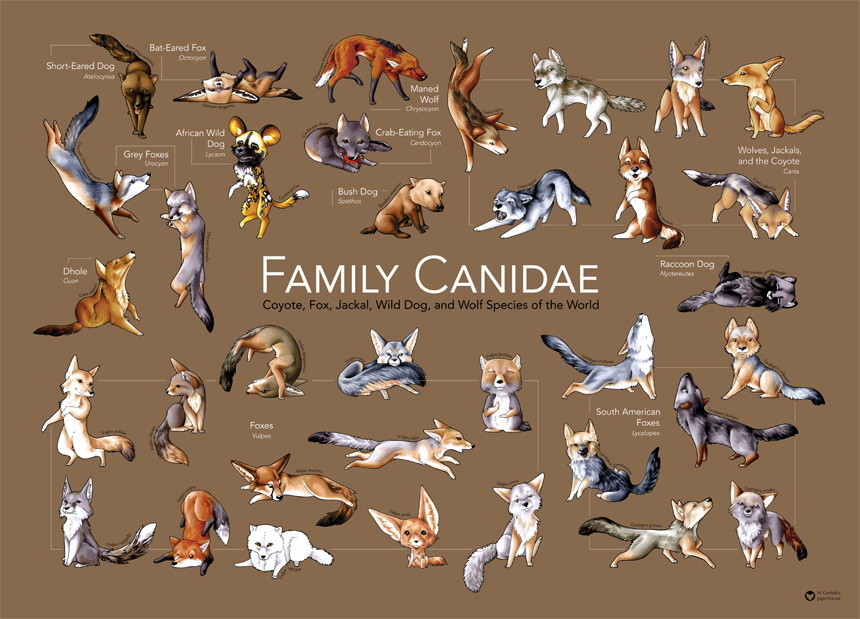 Family Canidae Poster by LastMorbidRose