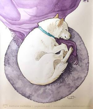 Goji Pet Portrait