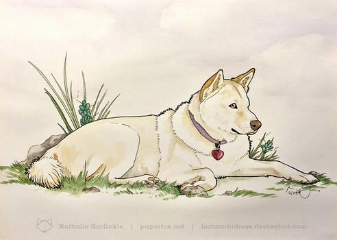 Lil Jindo Pet Portrait