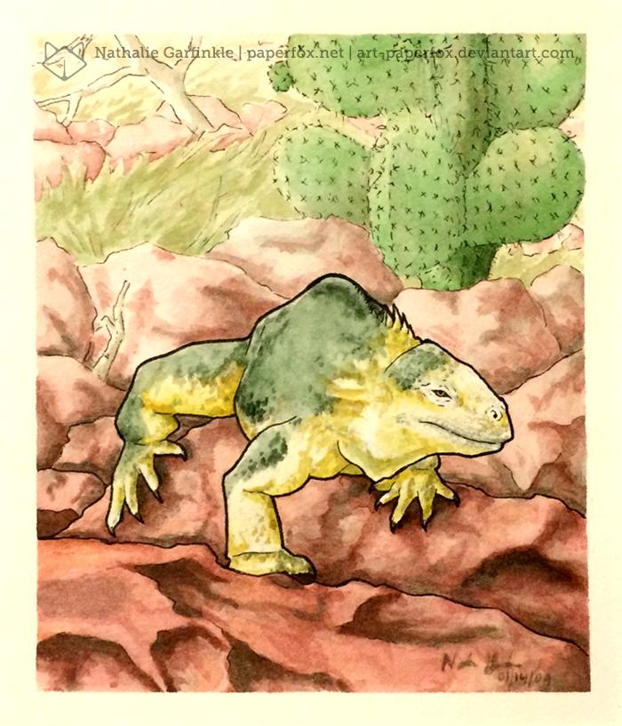 Galapagos by art-paperfox
