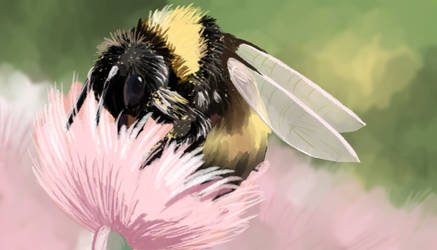 Bumble Bee spitpaint