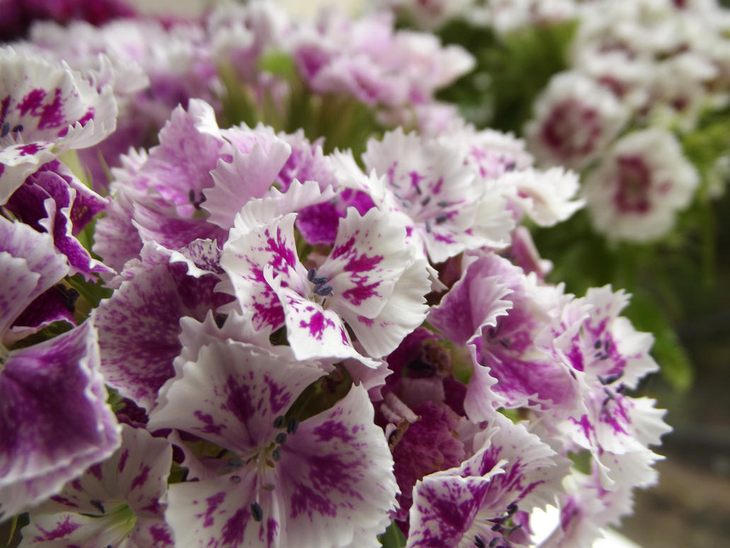 Purple And White Flowers By Flammable Llama On Deviantart