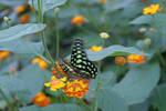 Butterfly1 by Esmeid