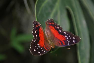 Butterfly2 by Esmeid