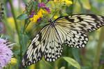 Butterfly5 by Esmeid