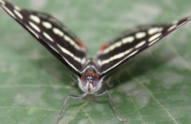 Butterfly6 by Esmeid