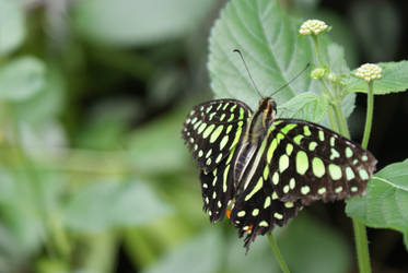 Butterfly7 by Esmeid