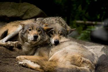 Wolves by PanDaemonAeon1