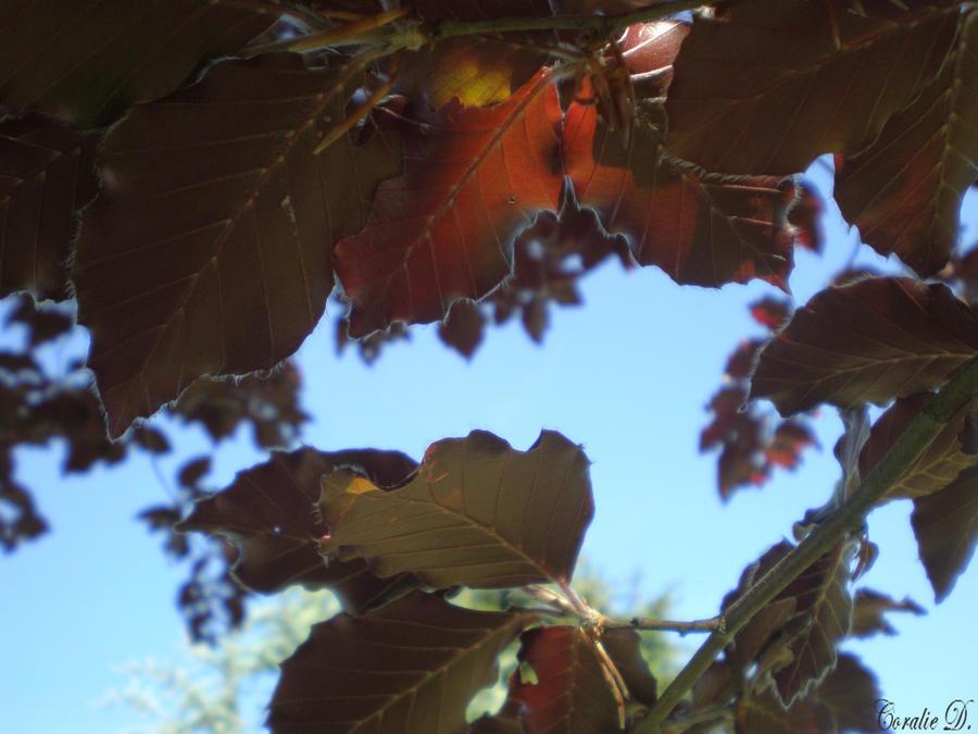 Blue sky through the leaves by XxComaWhite