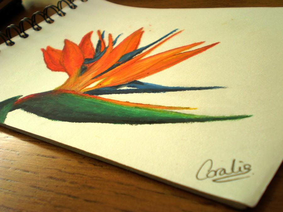 Oiseau de paradis. by XxComaWhite