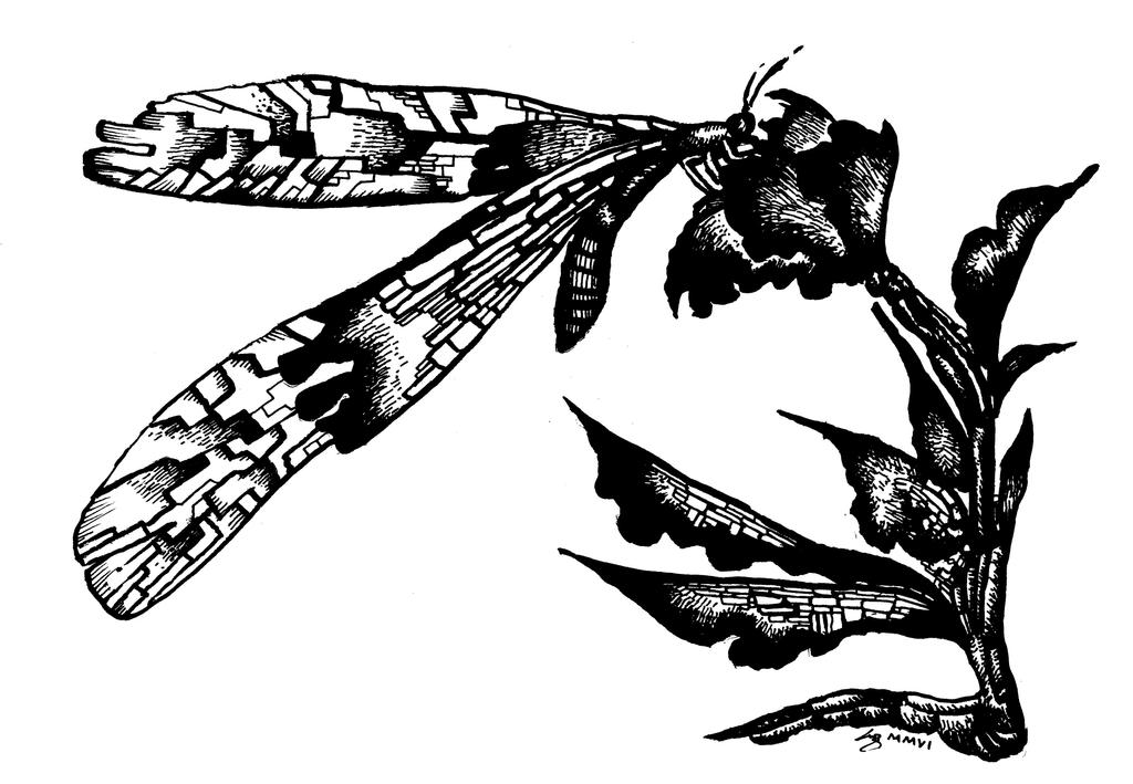 Dragonfly by nexarq
