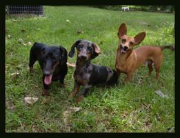 Three Amigos by alli-rae