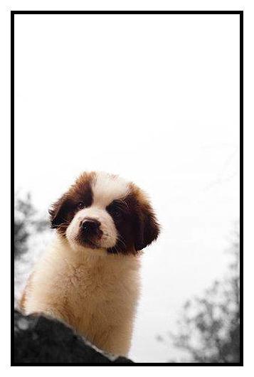 Puppy by Zinchh
