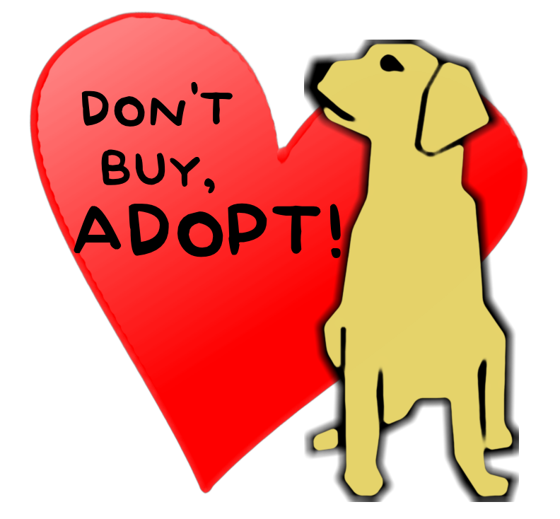 Adopt A Dog Dill Pickles Golden Retriever