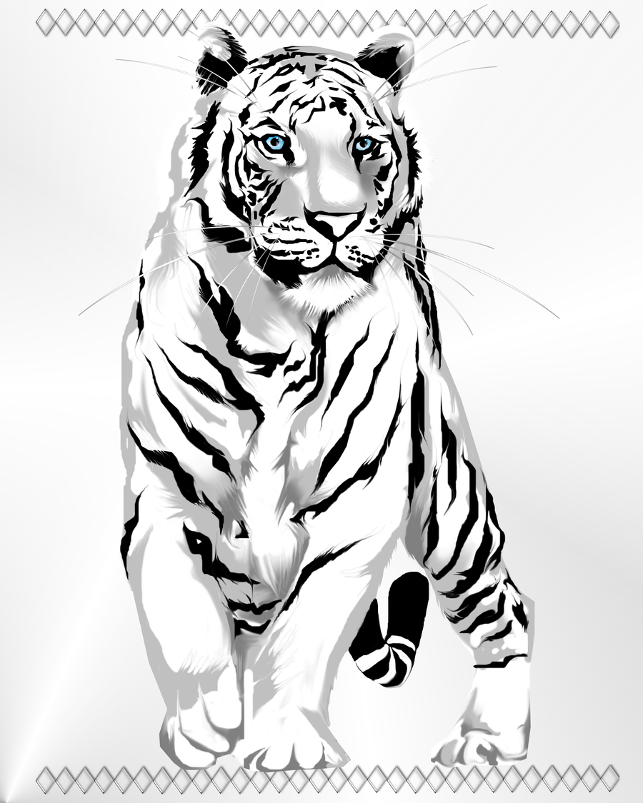 stately white tiger by lotacats05 on deviantart