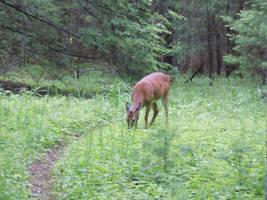 Deer my deer by aerinoutlander