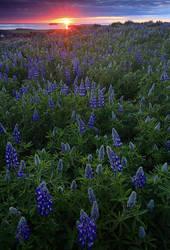 Husavik, Iceland by Brettc