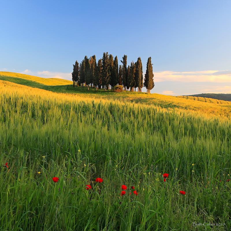 Cypress Trees, Italy by Brettc