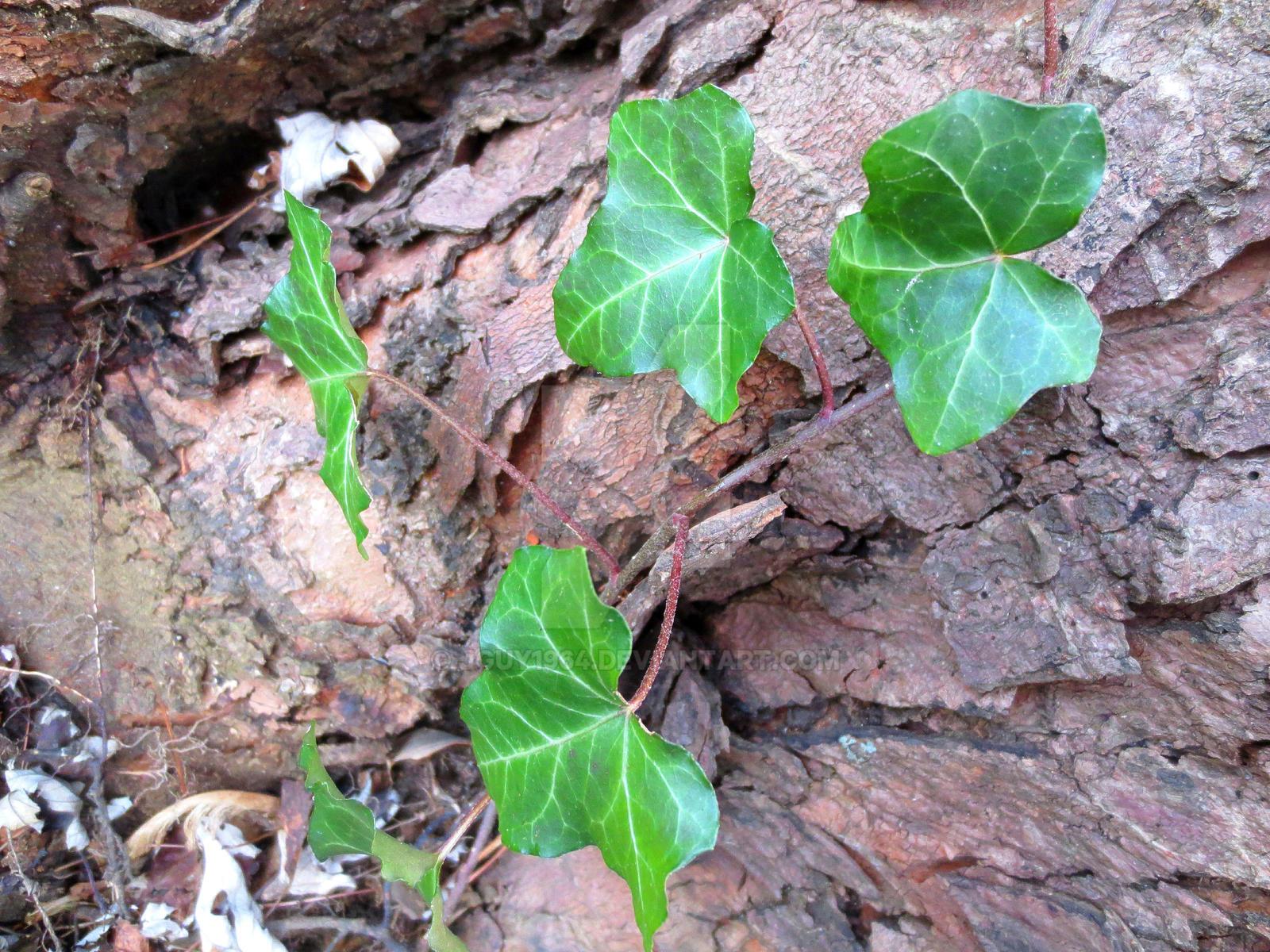 The humble beginnings of flora wellman