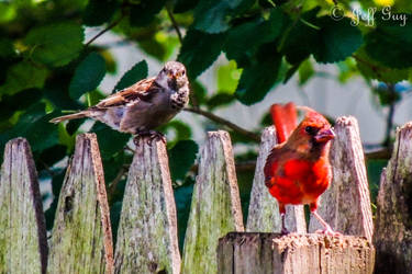 Project 365 - 251 - Meet The Parents by jguy1964