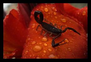 Scorpion by Creatunco