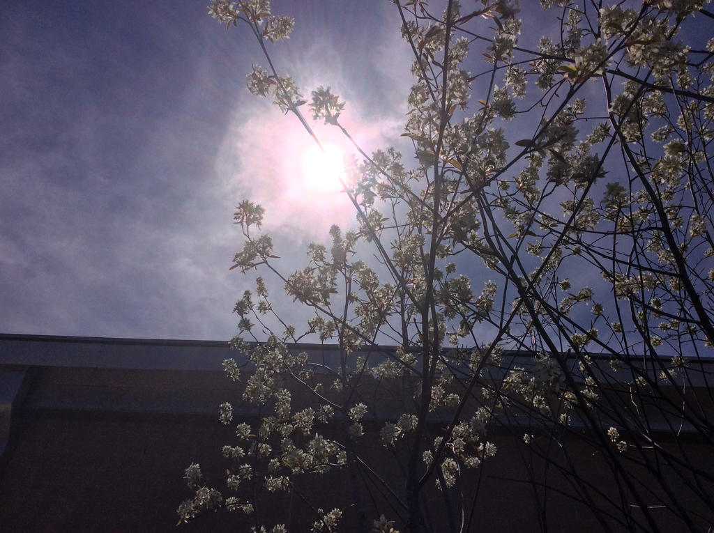 Took outside during botany class on Tuesday by BryceMigliore