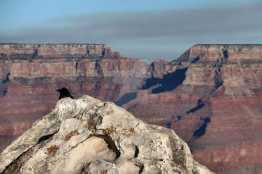 Lost in Grand Canyon