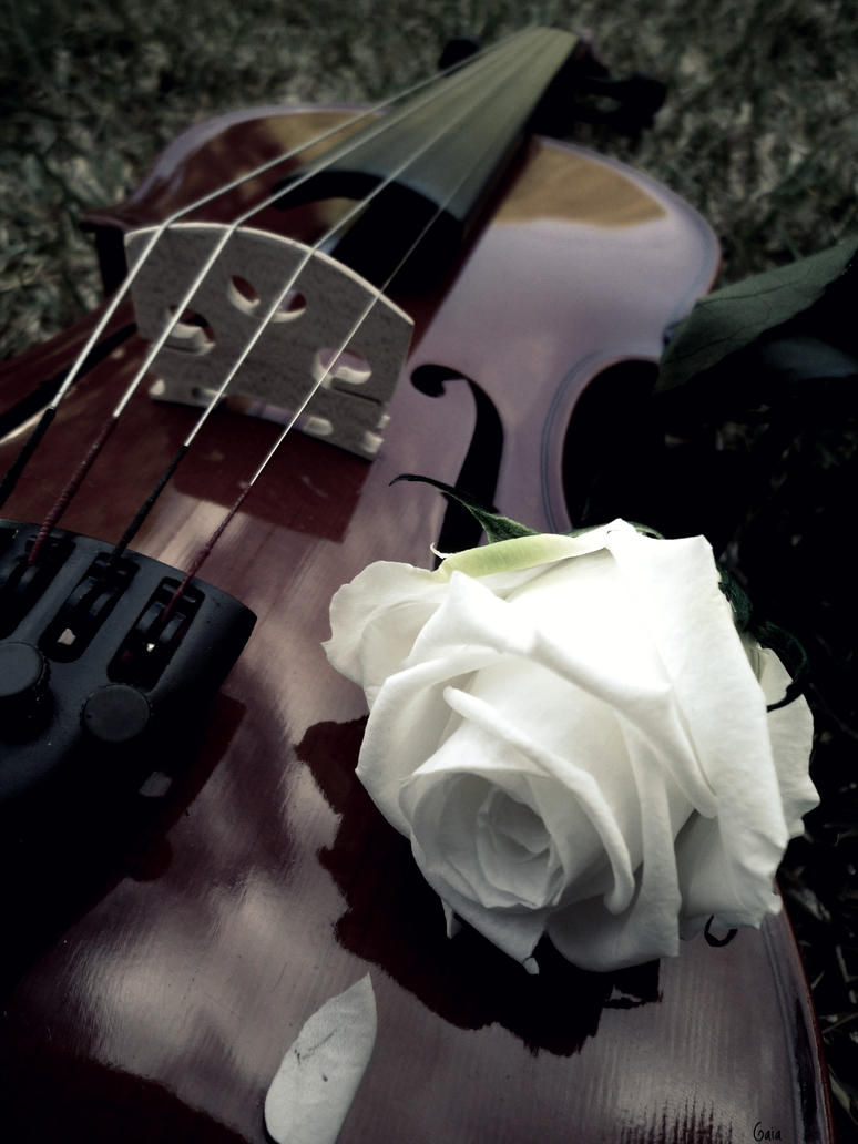 Sad Girl With Violin Photography | www.imgkid.com - The ...