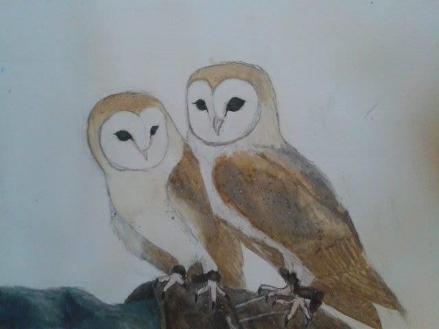 twin barn owls by shiro no okami on deviantart