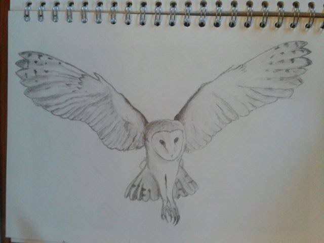 barn owl in flight by shiro no okami