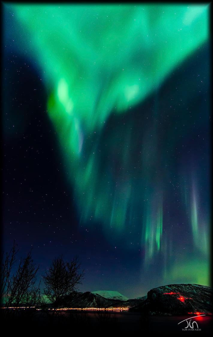 The Aurora Phoenix by torivarn