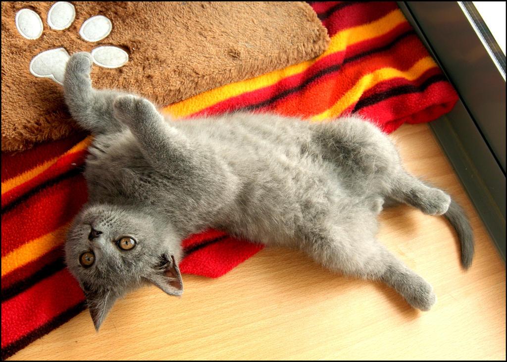 Rub my belly by arualcat