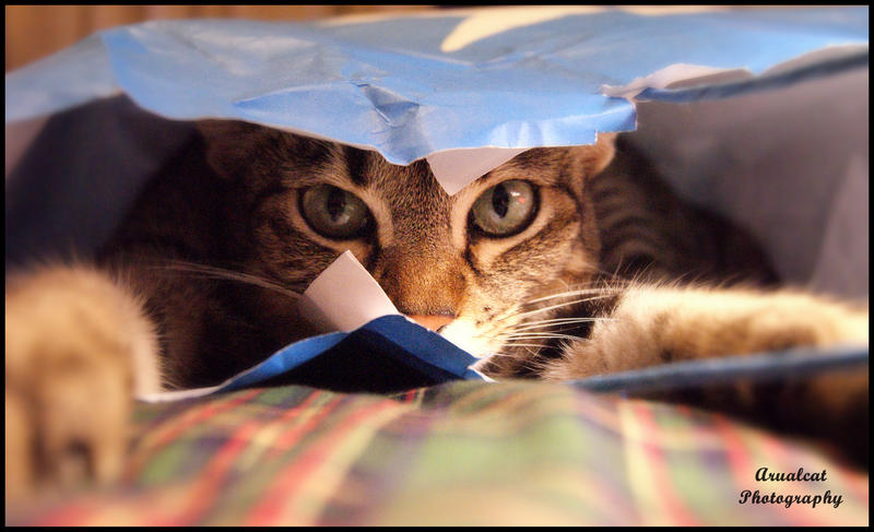The cat in the bag