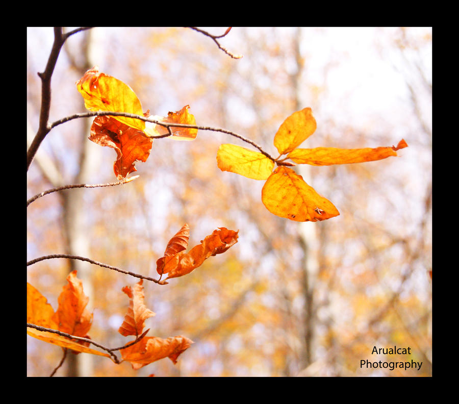 Autumn leaves by arualcat