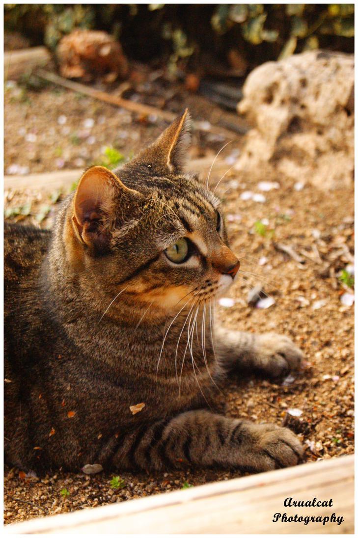 Cat in the garden by arualcat