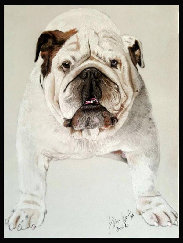 Bulldog by Sassis