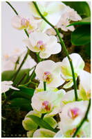 Orchid by Givens87