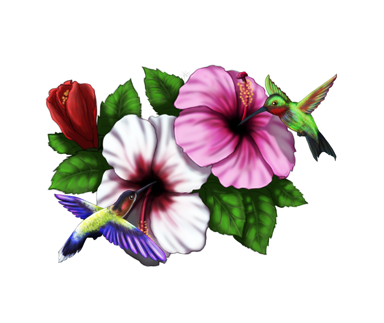Humming Birds Hibiscus by SpringSunshower
