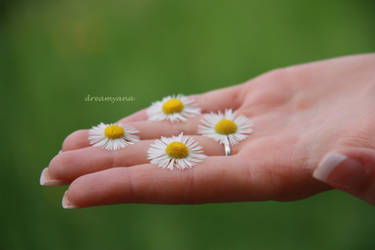 The Palm Of Your Hand by dreamyana