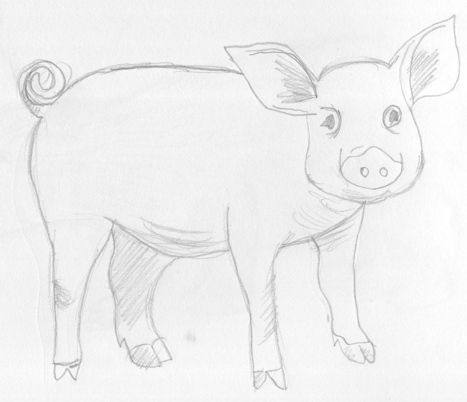 how to draw a realistic pig head