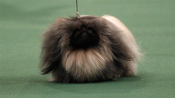 Funniest Looking Dog Breeds