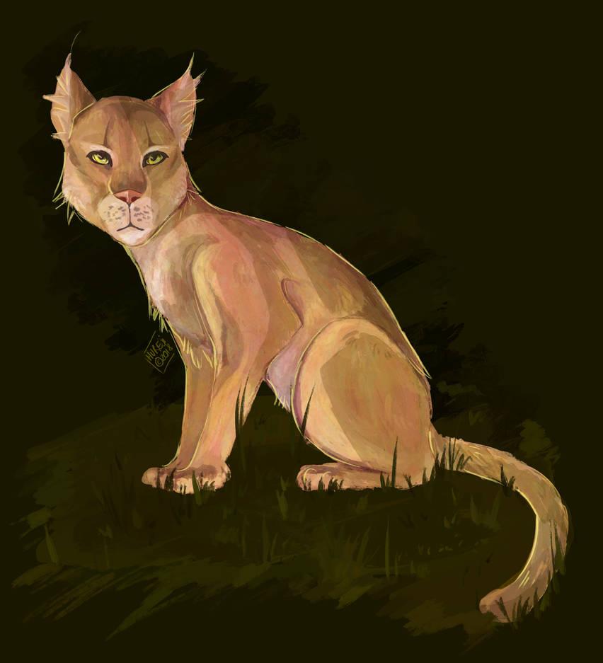 cougar by Hureji