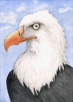 Bald Eagle Watercolor