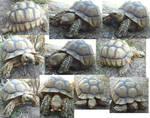 Desert Tortoise Free Stock Pack