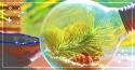 plant bulb. -f2u by kittoko