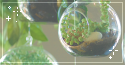 plant terrariums. -f2u
