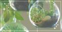 plant terrariums. -f2u by kittoko